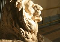 один з благородних левів
