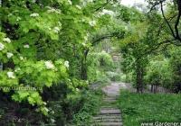 Фото. Ботанічний сад імені академіка Олександра Фоміна