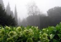 Фото. Нікітський ботанічний сад