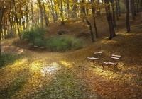 Стрийський парк восени