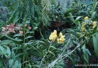 Фото. Національний ботанічний сад ім. М. Гришка