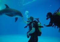 Фото. Дельфінарій «Немо» у Харкові