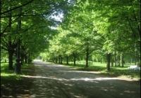 Фото. Карпівський сад