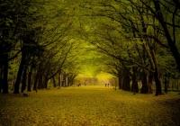 осіння краса