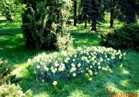 Фото. Ботанічний сад ім. Каразіна
